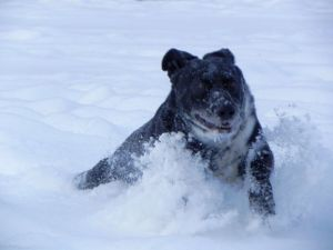 Pippo che nuota nella neve