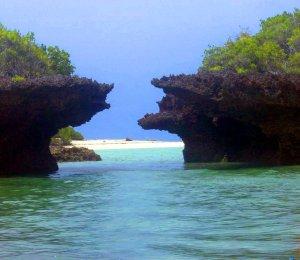 Foresta di mangrovie e laguna - Zanzibar