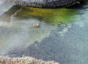 Il nuotatore