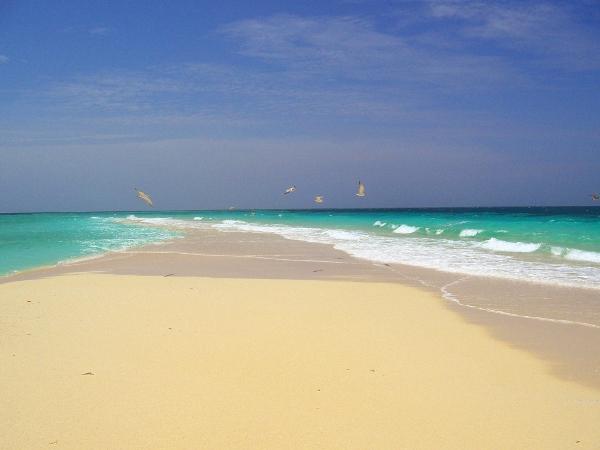 L'isola che non c'è, Zanzibar