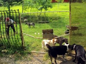 Pippo e Lilly con gli altri cani