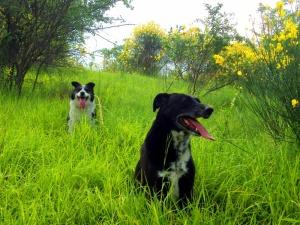 Pippo e Lilly con la lingua di fuori!