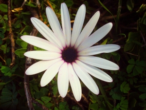 fioriDSC04024