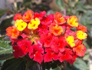 fioriDSC04147
