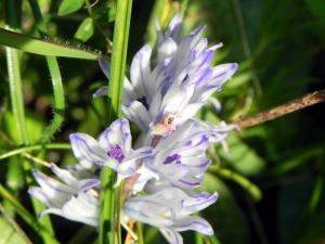 fioriDSCN8603