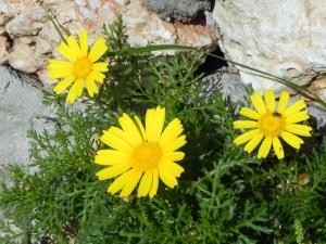 fioriDSCN8740